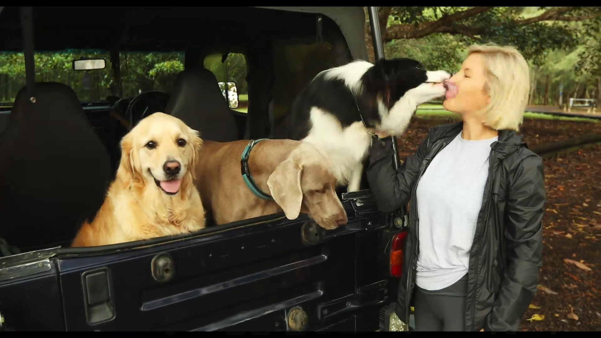 A still frame from the video Small Business Digital Champions: Barc for Pets